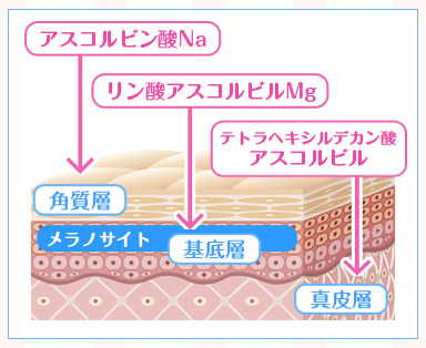 メラノサイトの発生源基底層までの浸透が可能に